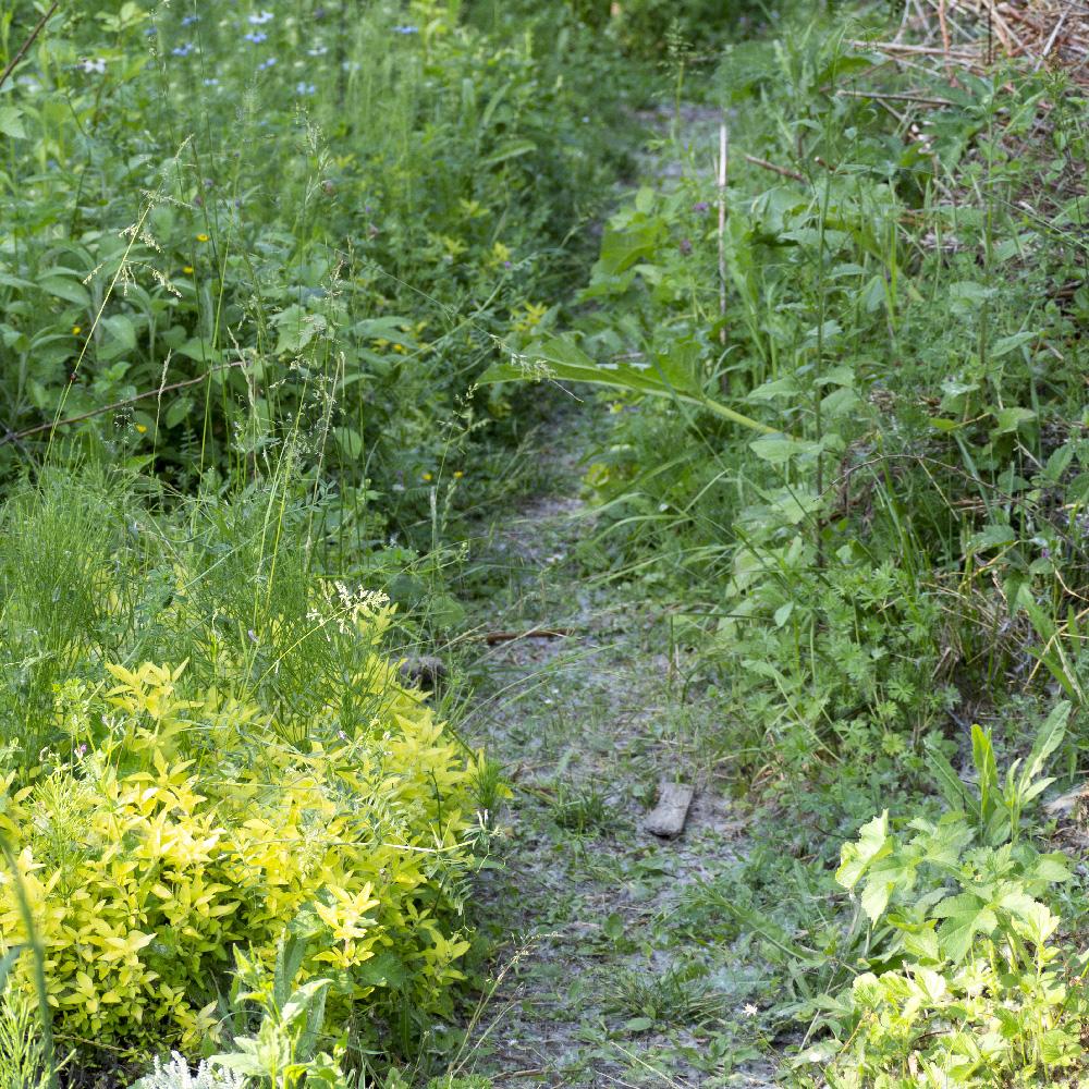Jardin de Chalouette en herbes