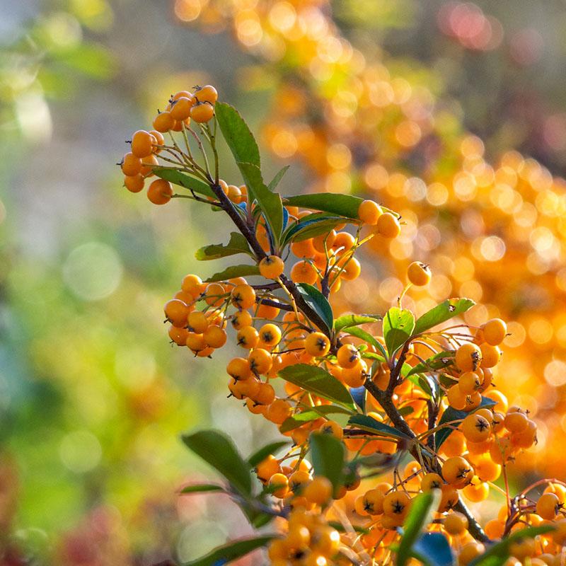 Plante d'hiver - photo Jennifer Martin